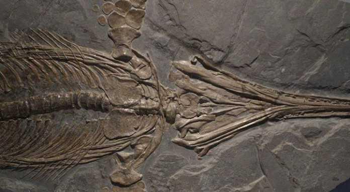 174 million yillik dinozavr qoldig'i topildi