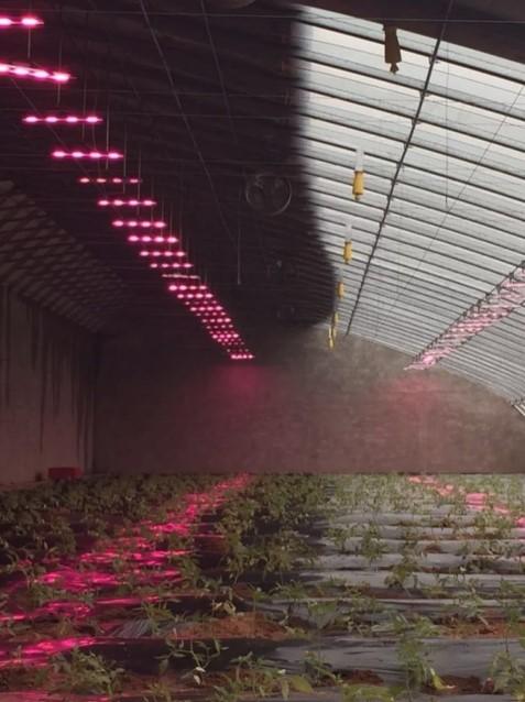 Ajabo! Xitoylik fermerlar sabzavotlarni elektr toki orqali tezroq o'stirishmoqda (+foto)