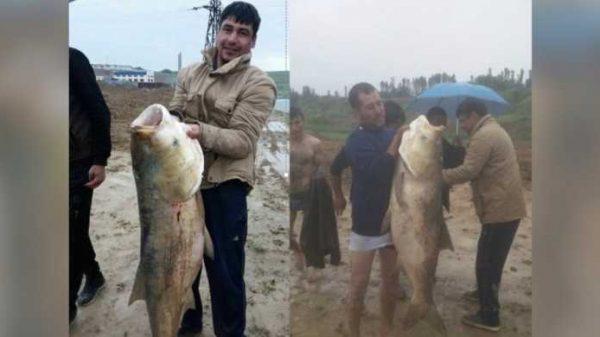 Baliqchilar «Tashmore»dan bahaybat baliq tutib olishdi! (Foto)
