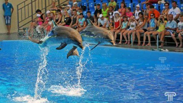 Toshkent shahrida delfinlar shousi namoyish etiladi
