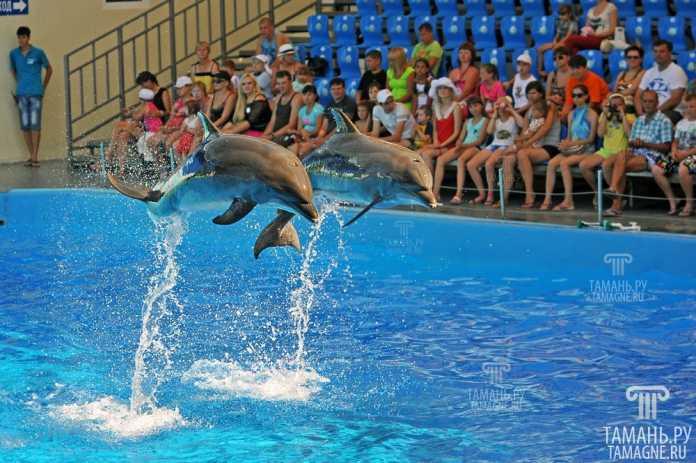 Toshkent shahrida delfinlar shousi namoyish etiladi 1