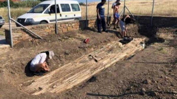 Gretsiyada arxeologlar toshga aylangan 20 million yillik daraxtni topdi