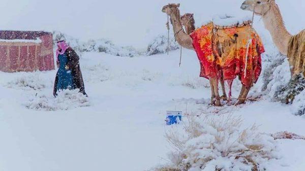 Sahroyi Kabir qor bilan qoplandi (foto)